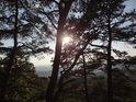 Odpolední Slunce mezi borovicemi nad Babím lomem.