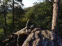 Padlý bukový kmen a živá borovice u skalního výčnělku.