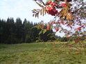 Jeřabiny dělají počátek podzimu barevně vyvážený.