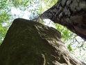 Vysoká borovice se tyčí k nebo v sousedství vysokého balvanu.