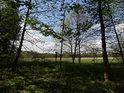 Z nitra lužního lesa je přes ceduli a nivu dále k řece Odře.