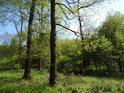 Větší i menší stromy v lužním prostředí.