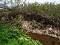 Potok se umí rozlítit, jak napovídá erozí obroušený břeh.