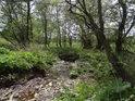 Olše a vrby na břehu potoka, Bedřichovka.