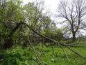 Polámané větve v malém luhu kolem potoka.