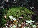 Mechový ostrůvek na sluníčku v nitru lesa.