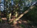 Stromy rostoucí, nalomené i téměř zlomené