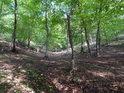 Prudce se svažující lesní terén se příliš snadno neslézá.