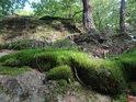 Mech se uchytil na skále a kořeny borovic též.