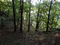 Mělké prudké lesní údolí.