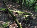 Tlející dubové kmeny v nitru Břenčáku.