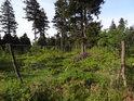 Drátěný plot se dřevěnými kůly má chránit především mladší stromy před likvidačním okusem zvěří.