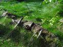 Pilou pořezaný opuštěný kmen buku se pomalu ztrácí v lesní trávě.