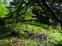 Pod bukovými větvemi.
