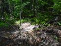 Sluneční flek v lesním křoví.