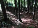 Znatelné korty občasného vodního tuku v horském lese.