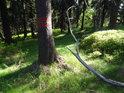 Vnější hranice chráněného území, označená obvyklým způsobem červenou dvojitou čarou na stromu.