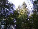 Slunce klesá a osvětluje jen hodní polovici lesa.