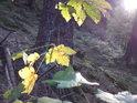 Užijme si barev podzimu, v roce 2009 v kombinaci se slunečními paprsky tak vzácnými.