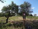 Úřední cedule u jabloně a višně.