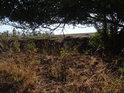 Zajímavý podhled pod křovím přes hranu svahu do polí.