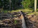 Rozkládající se polomové větve.