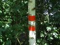 Vnější značka hranice chráněného území na mladé bříze.