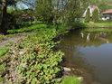 Jihozápadní břeh rybníka Dolní Svrčov.