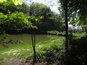 Pravý břeh rybníka Horní Svrčov zpoza temného křoví.