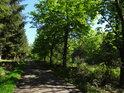 Cesta po pravém břehu rybníka rybníka Horní Svrčov.