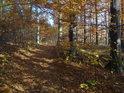 Lesní cesta přes Dřínovou.