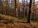 Mírnější lesní svah na Dřínové.