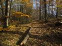 Uschlá kláda po buku leží přímo ve směru lesní cesty.
