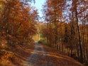 Romantická cesní cesta v podzimním hávu.