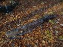 Na cestě ležící úlomek bukové větve.