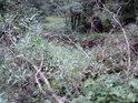 Vrby napovídají tomu, že se tu trvale drží vlhko.
