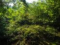 Pozdní léto a jeho sytá zeleň ze všech stran.