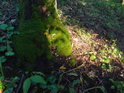 Mechem obrostlá pata stromu vypadá ve slunečním ostrůvku veseleji.