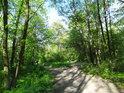 Lužní cesta přes Hraniční meandry Odry.