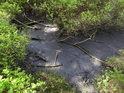 Jelení lázeň je nyní spíše bezedným rašeliništěm.