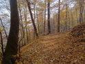 Dobře znatelná lesní cesta pokrytá čerstvě napadanými bukovými listy.