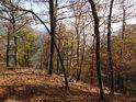 Údolí, které vidíme za zpola opadanými buky, vyhloubila řeka Svitava.