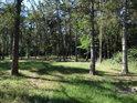 Menší smíšený les s převahou borovic.