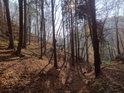 Prosluněný les ve svahu po opadání většiny listů.