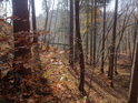 Les ve svahu je za podzimního Slunce kouzelný.