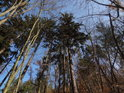 Smíšený les vypadá přirozeně a takových lesů by mělo být nejvíce.