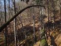Popadané a prohnuté kmeny stromů jsou po opadu listí v lese dobře patrné.