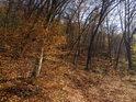 V některých místech v lese je poznat převládající směr větrů.