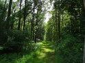 Postranní lesní cesta.