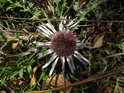 Uschlý květ na zemi.